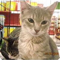 Adopt A Pet :: Bing - Riverside, RI