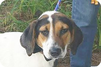 Hound (Unknown Type) Mix Dog for adoption in Mount Pleasant, South Carolina - Molly