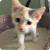 Adopt A Pet :: Miss Monroe - Irvine, CA