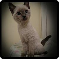 Adopt A Pet :: Chyna - Richmond, VA