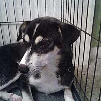 Adopt A Pet :: Winny - fayetville, NC