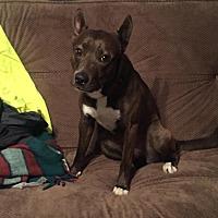 Adopt A Pet :: Bella - Davenport, IA