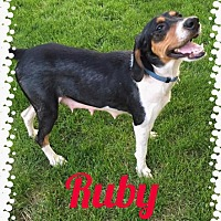 Adopt A Pet :: Ruby - Fort Wayne, IN