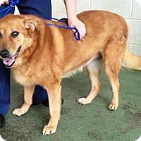 Adopt A Pet :: Sylvan - BIRMINGHAM, AL