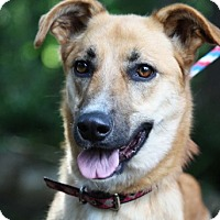Adopt A Pet :: Bailey in CT - East Hartford, CT