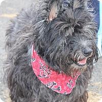 Adopt A Pet :: NIKO - Clayton, NJ