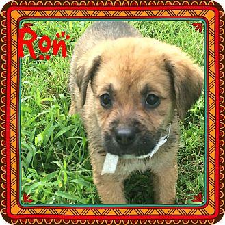 Bernese Mountain Dog/St. Bernard Mix Puppy for adoption in HARRISBURG, Pennsylvania - THE FANTASTIC 5