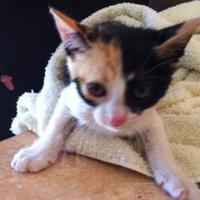 Adopt A Pet :: COCO - St. Thomas, VI