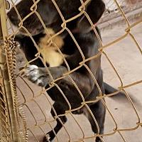 Adopt A Pet :: Charlie - Melrose, FL