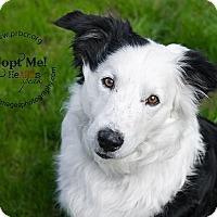 Adopt A Pet :: King - Charleston, SC