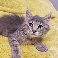 Adopt A Pet :: Kevin Bacon - Fairbury, NE
