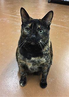 Adopt A Pet :: Delilah Sue  - Blasdell, NY
