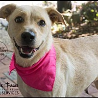 Adopt A Pet :: MAGGIE CARPENTER - Grand Prairie, TX