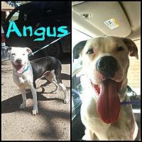 Adopt A Pet :: Angus - Lancaster, CA