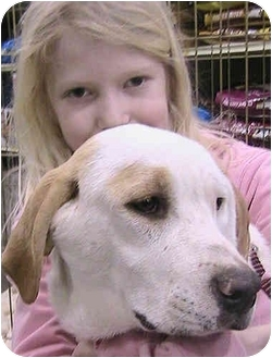 Pointer/Labrador Retriever Mix Dog for adoption in Greensboro, North Carolina - Taya