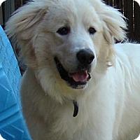 Adopt A Pet :: Archie  *Adopted - Oklahoma City, OK