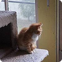 Adopt A Pet :: Talia - Tarboro, NC