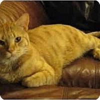 Adopt A Pet :: Moose - Davis, CA