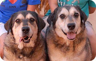 Australian Shepherd/Labrador Retriever Mix Dog for adoption in Las Vegas, Nevada - Brian