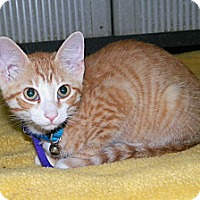 Adopt A Pet :: Bender - Dover, OH