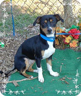 Hound (Unknown Type) Mix Dog for adoption in Marietta, Georgia - GASPARIN - see video