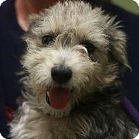 Adopt A Pet :: Munaco - Canoga Park, CA