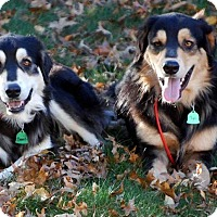 Adopt A Pet :: Clyde & Bonnie - New Canaan, CT