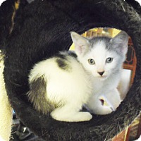 Adopt A Pet :: Frosty - Xenia, OH