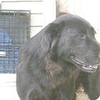 Adopt A Pet :: Jaycee - Albany, NY