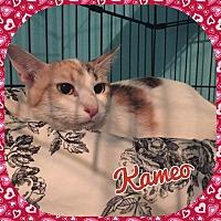 Adopt A Pet :: Kameo - Enid, OK