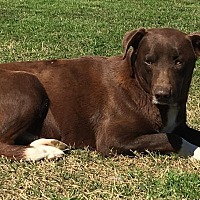 Adopt A Pet :: Kincaid - Kaufman, TX