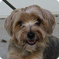 Adopt A Pet :: Toby - Washington, DC