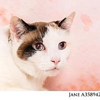 Adopt A Pet :: JANE - Reno, NV