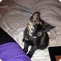 Adopt A Pet :: Maude-very social - Los Angeles, CA