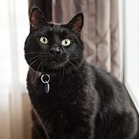Adopt A Pet :: Roo Kanga - Edmonton, AB