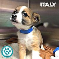 Adopt A Pet :: Italy - Kimberton, PA