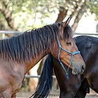 Adopt A Pet :: Whitley - El Dorado Hills, CA