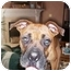 Photo 2 - Boxer Dog for adoption in W. Columbia, South Carolina - Chester