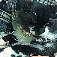 Adopt A Pet :: Gary - Riverhead, NY