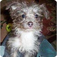 Adopt A Pet :: Pocket - Duluth, GA