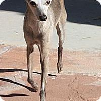 Adopt A Pet :: Penelope - LV - Costa Mesa, CA