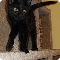 Adopt A Pet :: Bizzie - Acme, PA