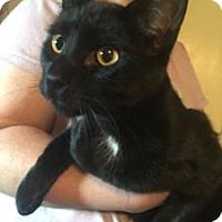 Adopt A Pet :: Gypsey - Colorado Springs, CO