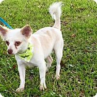 Adopt A Pet :: Chuy - Houston, TX