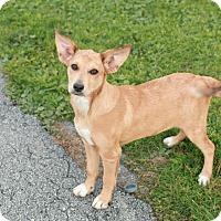 Adopt A Pet :: Bambi - CHESTERFIELD, MI