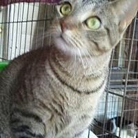 Adopt A Pet :: Miranda - Beaumont, TX