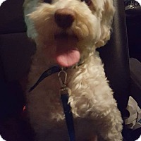 Adopt A Pet :: Bones - San Diego, CA