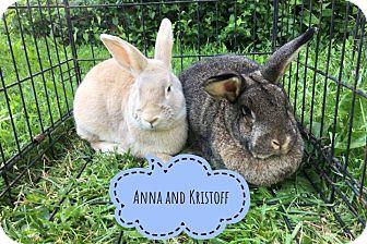 Other/Unknown Mix for adoption in Elizabethtown, Kentucky - Anna