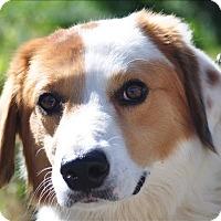 Adopt A Pet :: Tyler - Osage Beach, MO