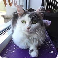 Adopt A Pet :: Barbara Jean - Trevose, PA